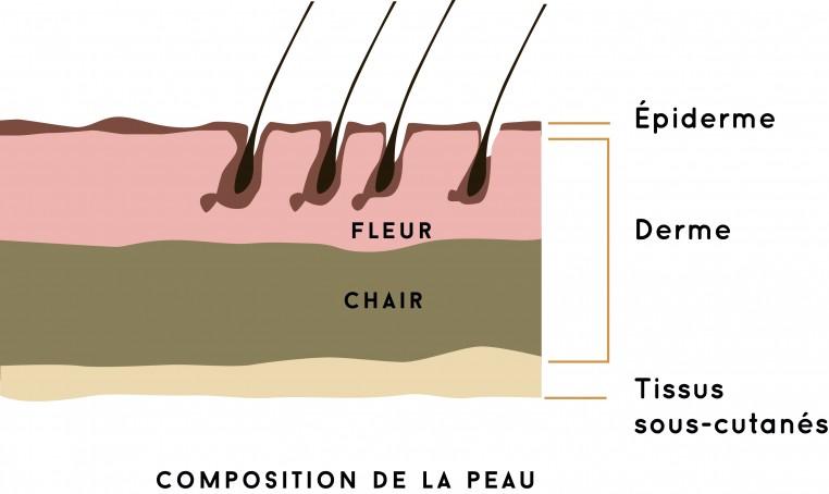 Composition de la peau.